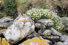 Spring flowers on old stone wall Royalty Free Stock Photos
