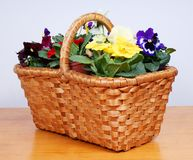 Spring flowers in old wooden basket Royalty Free Stock Photos