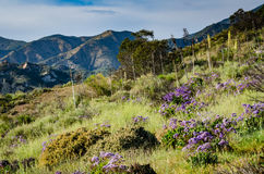 Spring Flowers - Orange County, California. Purple flowers in a meadow on the hill slope of a canyon in Orange County, California with a view of the Santa Ana Royalty Free Stock Images
