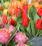 Spring flowers-orange and red tulips. Orange and red tulips in a vase. Spring concept royalty free stock image