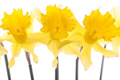 Spring  flowers  over white Royalty Free Stock Images