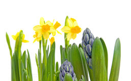 Spring flowers over white background Royalty Free Stock Images