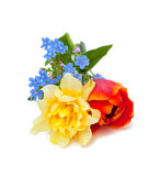 Spring flowers over white Royalty Free Stock Image