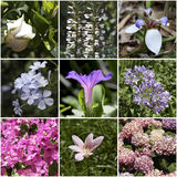Spring flowers palette. Collage. Stock Images