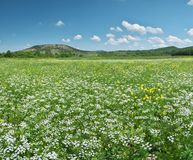 Spring flowers panorama royalty free stock photography