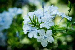 Spring flowers in the park. A blue and special flower royalty free stock images