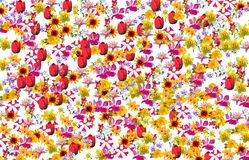 Spring flowers pattern Royalty Free Stock Photos