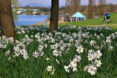 Spring flowers and perfect sunny day, Germany Royalty Free Stock Images
