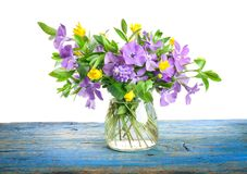 Spring flowers Periwinkle in glass vase Stock Photo