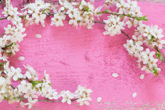 spring flowers on pink wooden background Stock Image