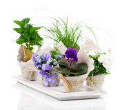 Spring flowers and plants Royalty Free Stock Image