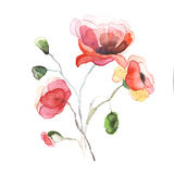 The spring flowers poppy painting watercolor isolated Stock Image