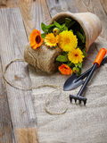 Spring flowers in the pot and garden tools  on an old wooden tab Stock Photo