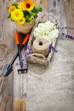 Spring flowers in the pot and garden tools  on an old wooden tab Stock Image