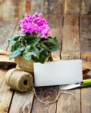 Spring flowers in the pot and garden tools  on an old wooden tab Royalty Free Stock Images