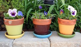 Spring flowers in pots Royalty Free Stock Image