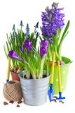 Spring flowers in pots Stock Photo