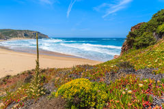 Spring flowers on Praia do Amado beach Royalty Free Stock Images