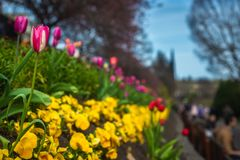 Spring Flowers in Princes Street Gardens, Edinburgh, Scotland. Tulips and Pansies With People in the Background on a Spring Day in Princes Street Gardens royalty free stock photography