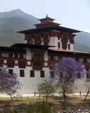 Spring flowers at Punakha Dzong in Bhutan stock photo