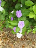 Spring flowers. Purple and white flowers Stock Image