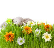 Spring flowers and rabbit on green grass Stock Photos
