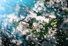 Spring flowers in a rainy day Royalty Free Stock Image