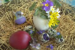 Multicolored Gouldian finch between blooming spring flowers and a red Easter egg. The spring flowers are Ranunculus, Chamomile, Wild Violet, Polish Primrose and stock photography