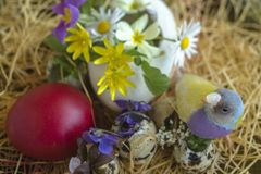 Multicolored Gouldian finch between blooming spring flowers and a red Easter egg. The spring flowers are Ranunculus, Chamomile, Wild Violet, Polish Primrose and stock images