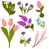 Spring Flowers Realistic Collection on White. Royalty Free Stock Photos
