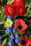 Spring flowers in red and blue Stock Images