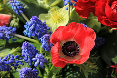 Spring flowers in red and blue Stock Photos