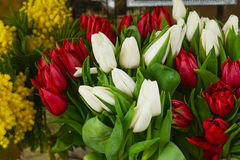 Spring flowers-red and white tulips and mimosa. At a market royalty free stock photos