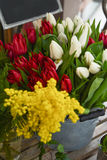 Spring flowers-red and white tulips and mimosa. At a market stock photo