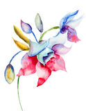 Spring flowers. Spring romantic flowers, watercolor illustration Stock Photo