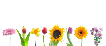 Spring flowers in a row Stock Images