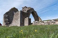 Spring flowers by a ruin. Spring flowers by an old chapel ruin at the island Oland in Sweden Stock Photos