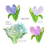Spring flowers set Royalty Free Stock Images