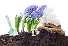 Spring. Flowers, shovel, straw hat and soil - isolated on white. Royalty Free Stock Image