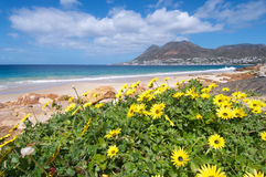 Spring flowers Simonstown Royalty Free Stock Image