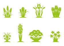 Spring flowers. Six green separated vector images of first spring flowers Royalty Free Stock Images
