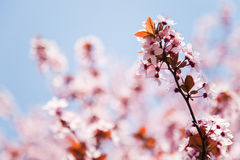 Spring flowers and sky Stock Photo