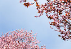 Spring flowers on sky Royalty Free Stock Photos