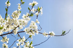 Spring flowers in sky stock photography