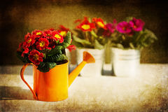 Spring flowers with grunge texture Royalty Free Stock Photography