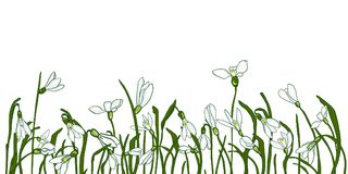 Spring flowers snowdrops. Fresh snowdrops on a gray background with space for text. Card with the first spring flowers. Vector illustration of graphic snowdrops Stock Photo