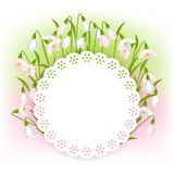 Spring flowers snowdrops natural background Stock Images