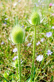 Spring flowers. Spiky green plant photographed by close Stock Photo