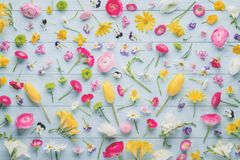 Spring flowers. Collection on wood background stock images