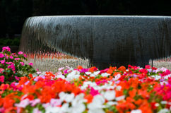 Spring flowers and stream Stock Image